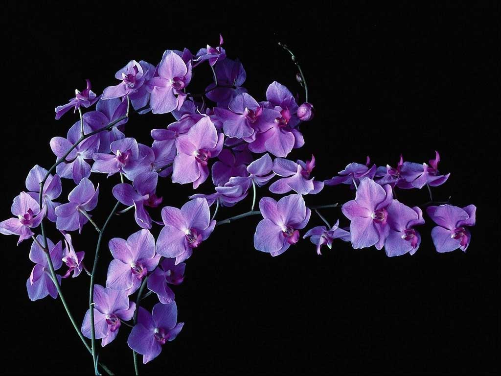 Картинки букет орхидеи