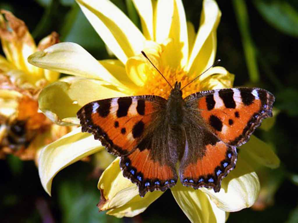 Бабочка 13 бабочка 14 бабочка 15 бабочка