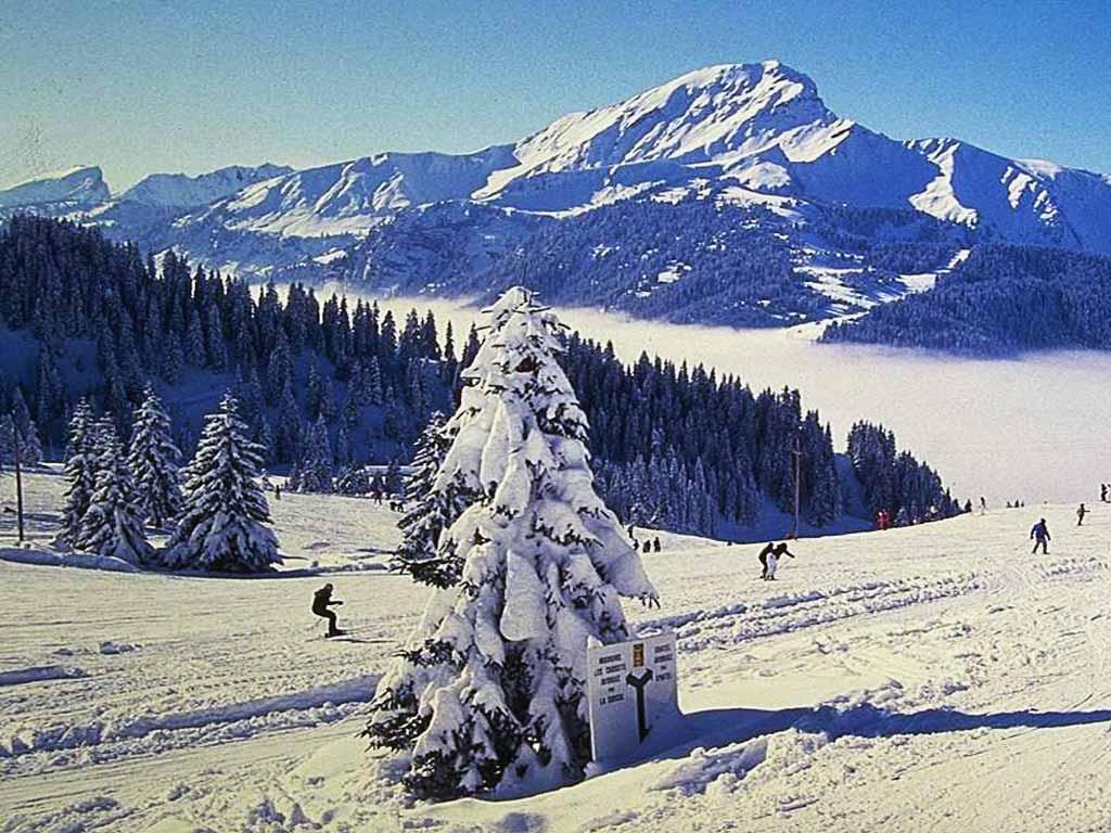 Зима фотографии фото времена года